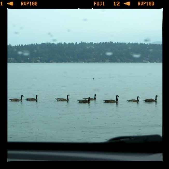 Lake Washington, Seattle