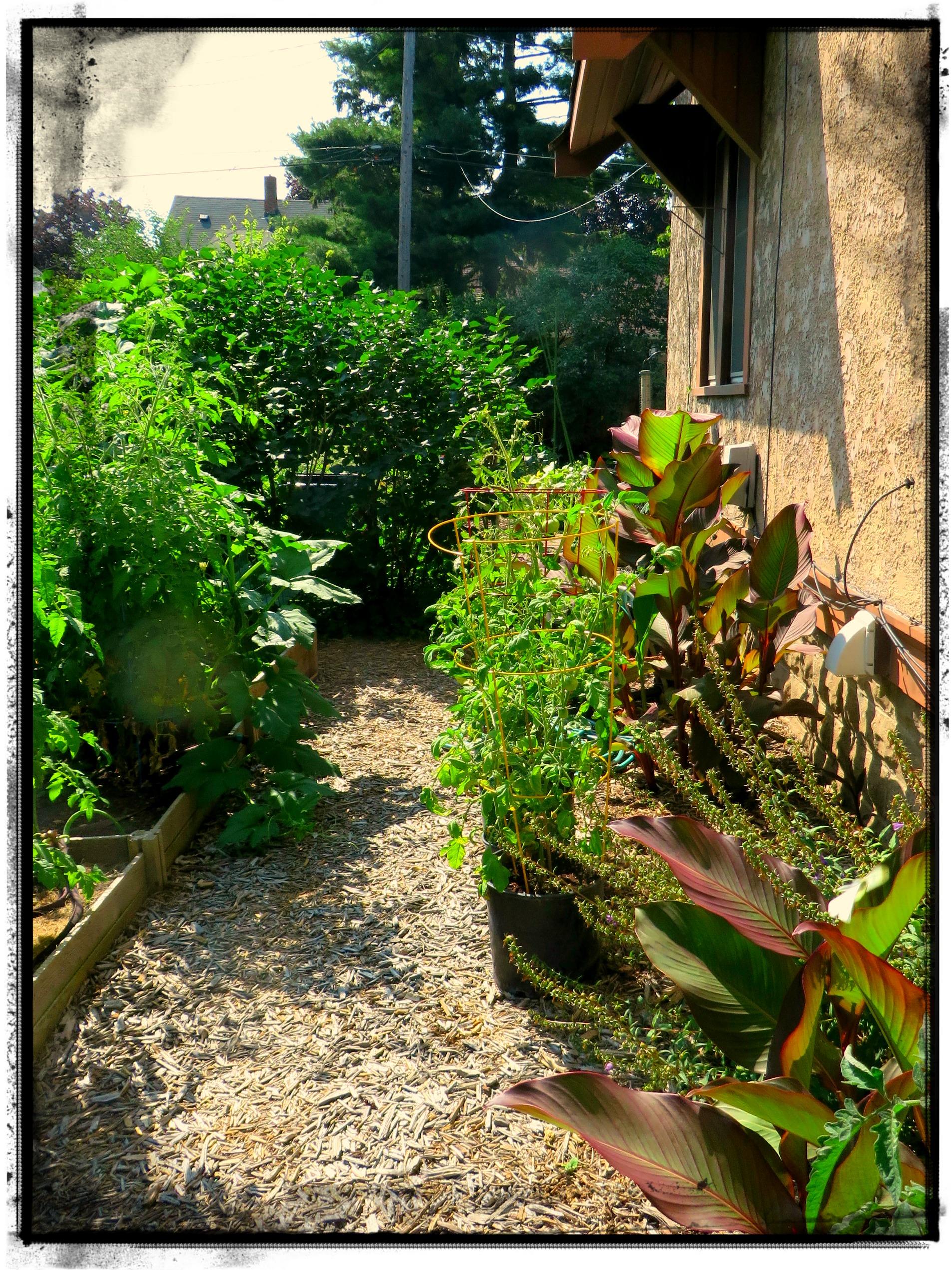 Path into McGregor's Garden