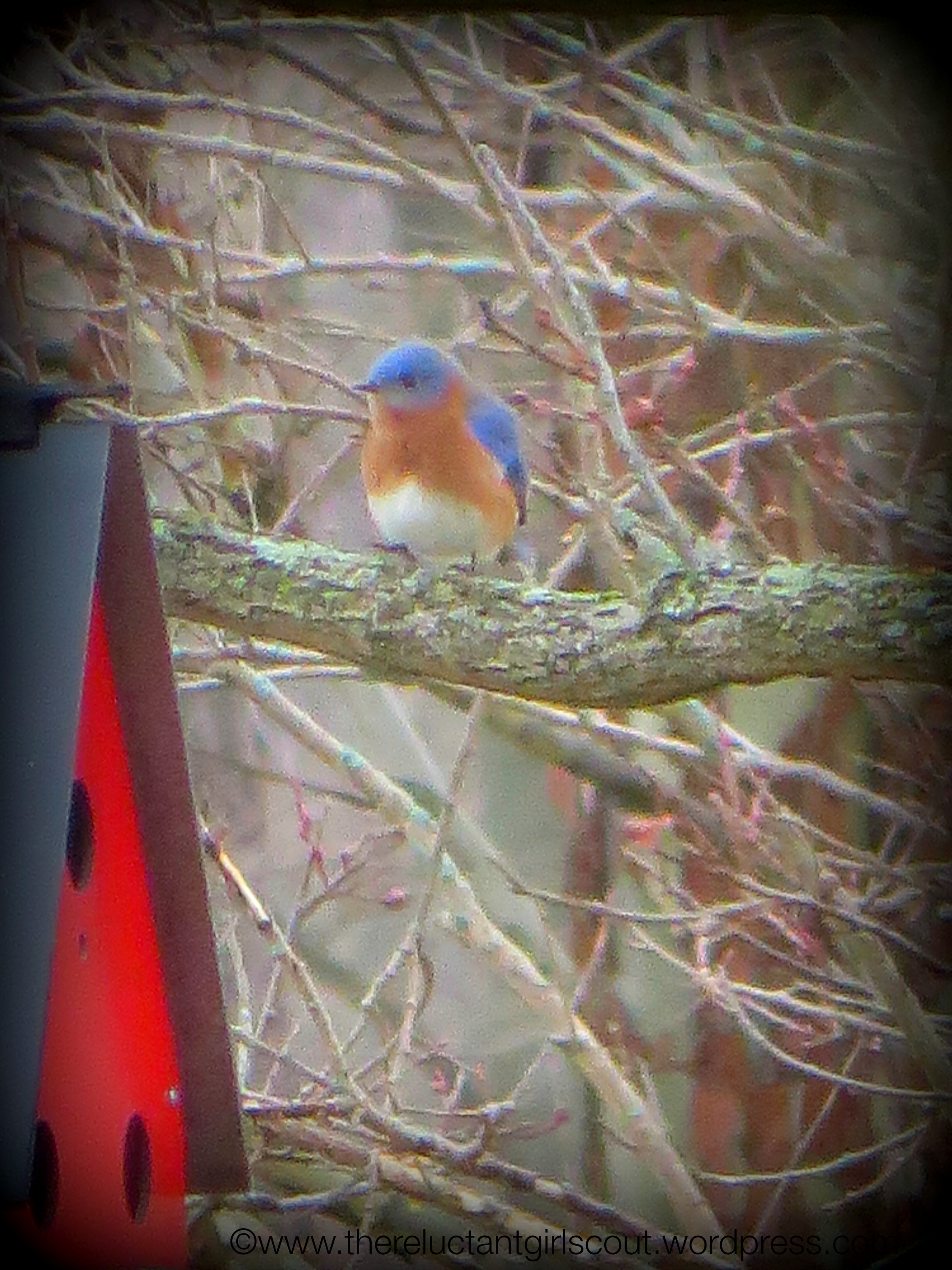 Bluebird considering a move to East Central Indiana.