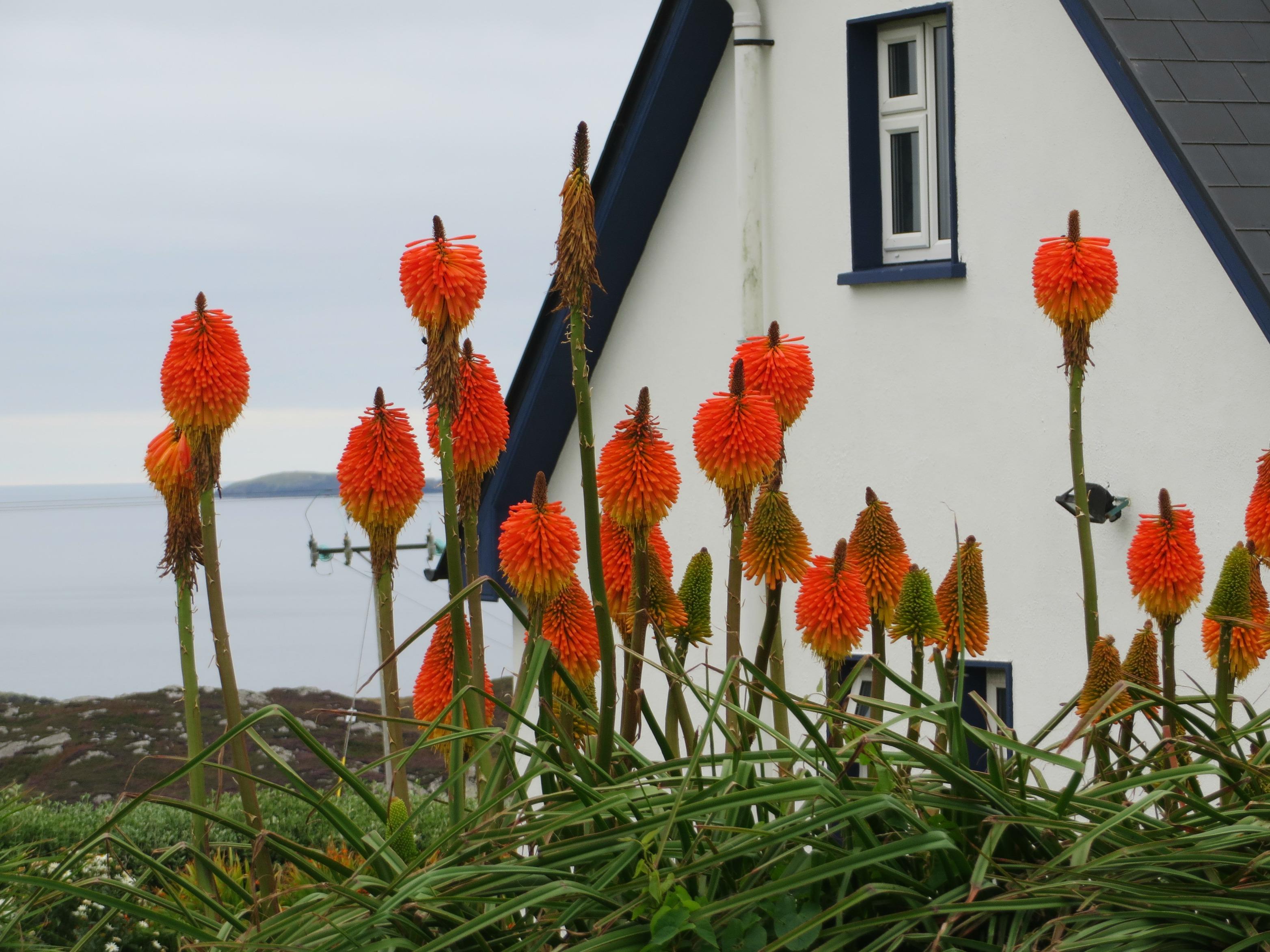 rgsbofinflowers2015