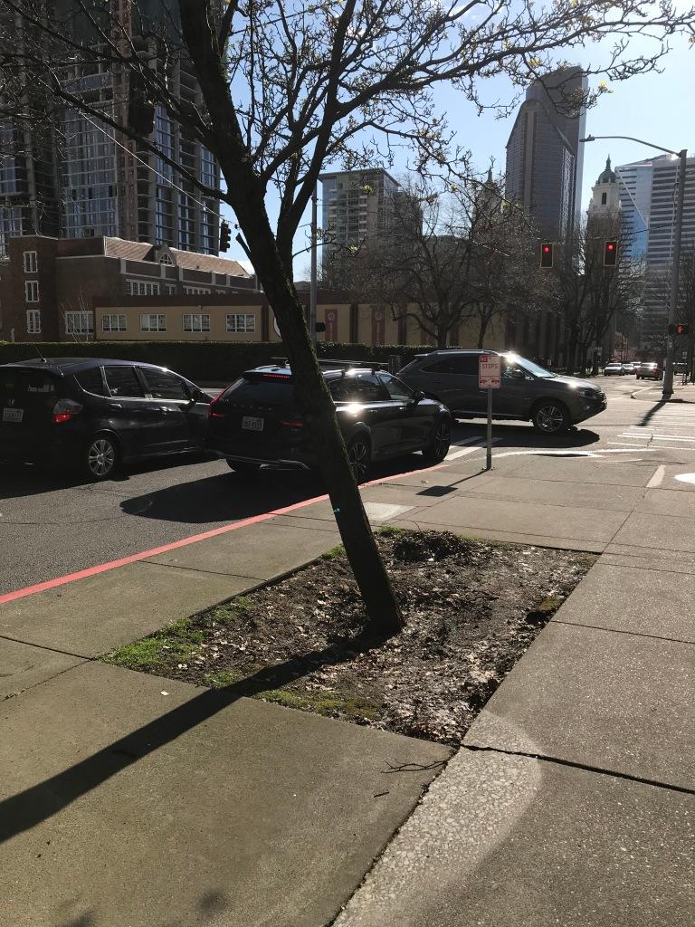 leaning tree on city street.